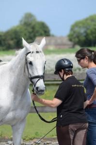 Grondwerk voor een gehoorzaam paard
