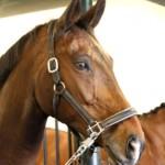 Hoe weet je of je paard ontspannen is?
